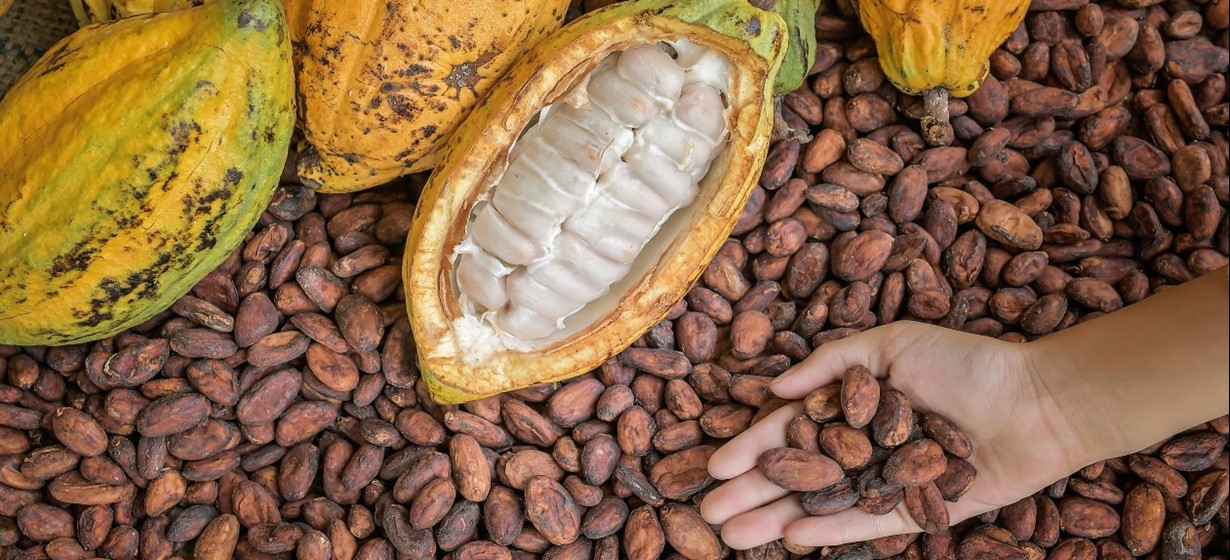 Prerada kakaovca | Kandit